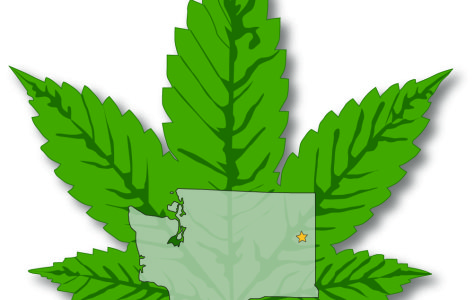 State rules nipping Spokane's bud