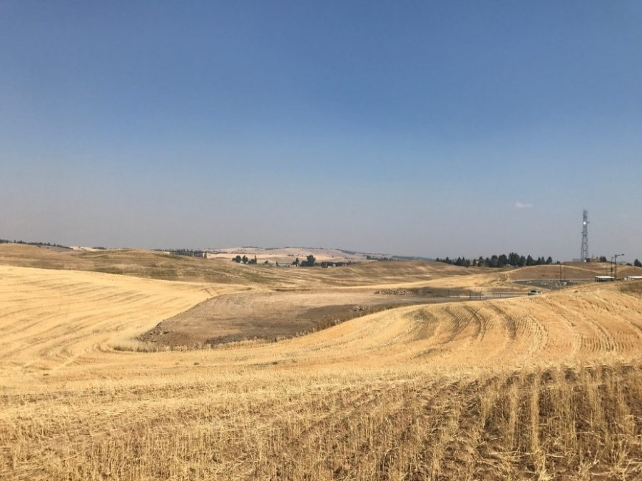 The current site of the Palouse Prairie Restoration Project. This 140 acres of EWU-owned land has been used as wheat cultivation since 1953.